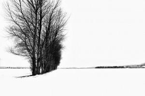 Een witte wereld