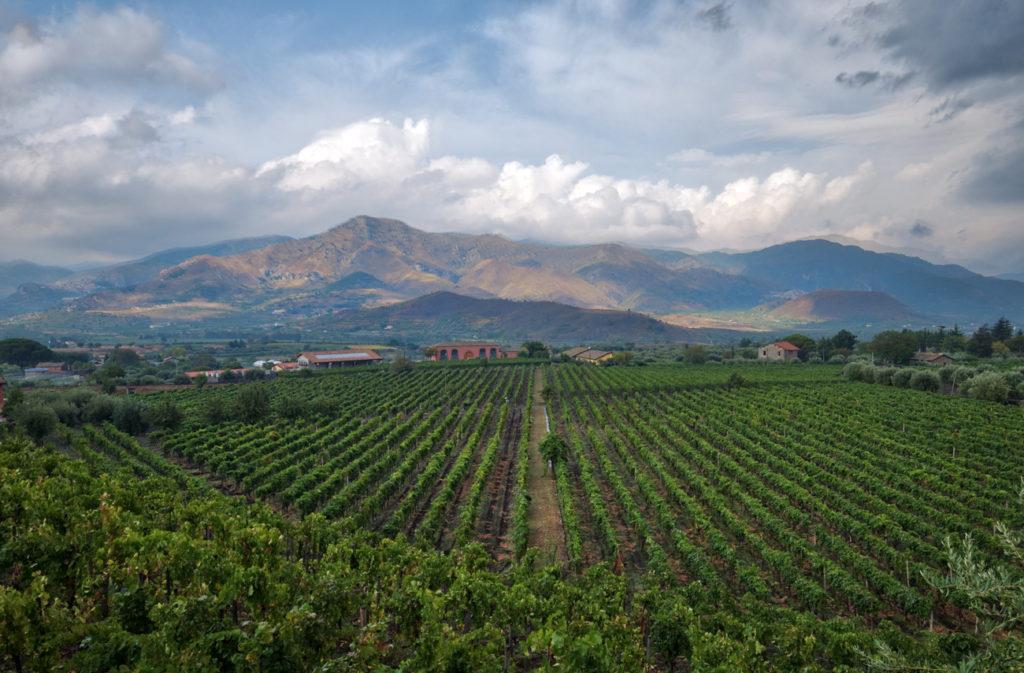 Wijngaard op Sicilië